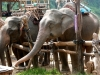 karen-ruammit-village-elephants-4