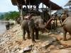 karen-ruammit-village-elephants-6