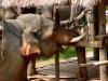 karen-ruammit-village-elephants-9