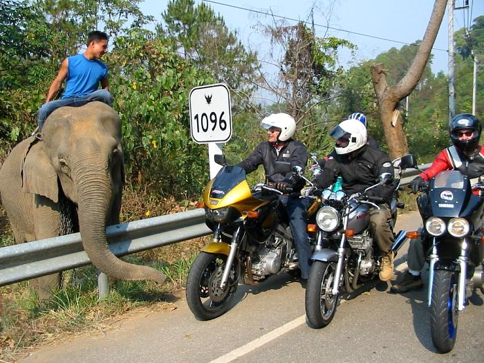 R1096 the Samoeng elephant road.