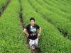 tea-doi-mae-salong008