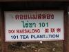 tea-doi-mae-salong009