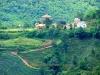 tea-plantation-doi-mae-salong-9