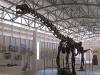 chiang-muan-dinosaur-park-005