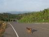 route-1148-chiang-kham-tha-wang-pha-019