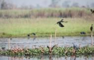 Myanmar - Inndawgyi Lake named biosphere reserve