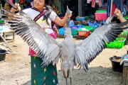 Myanmar - Kachin Wildlife trade in Puta-o