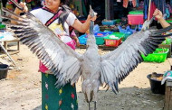Myanmar - Kachin Wildlife trade in Puta-o