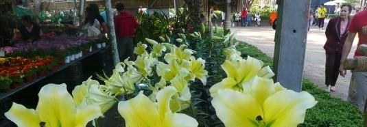 chiang-rai-garden-show-1