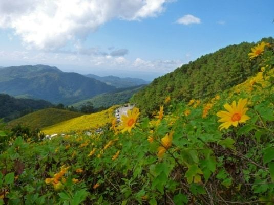 Bua Thong (Mexican sunflowers) - Ban Mae-u-Khor - Mae Hong Son35